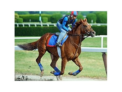 "Animal Kingdom at Belmont Park<br><a target=""blank"" href=""http://www.bloodhorse.com/horse-racing/photo-store?ref=http%3A%2F%2Fpictopia.com%2Fperl%2Fgal%3Fprovider_id%3D368%26ptp_photo_id%3D9561541%26ref%3Dstory"">Order This Photo</a>"