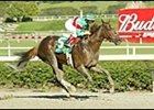 Victory U. S. A. to Attempt Fair Grounds Oaks