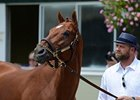 "I'll Have Another<br><a target=""blank"" href=""http://photos.bloodhorse.com/TripleCrown/2012-Triple-Crown/Belmont-Stakes-144/23333063_3WZKbw#!i=1893725566&k=dp4WZnH"">Order This Photo</a>"