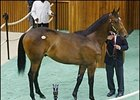 Storm Cat colt tops final night at $1.2 million.