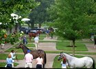 Fasig-Tipton July 2011 Sale