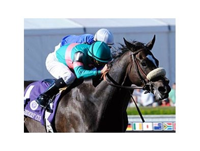 "Breeders' Cup Ladies Classic winner Zenyatta could make her debut in the Louisville Distaff Breeders' Cup Stakes May 1 at Churchill Downs. <br><a target=""blank"" href=""http://www.bloodhorse.com/horse-racing/photo-store?ref=http%3A%2F%2Fgallery.pictopia.com%2Fbloodhorse%2Fgallery%2FS613064%2Fphoto%2F6470967%2F%3Fo%3D7"">Order This Ph</a>"