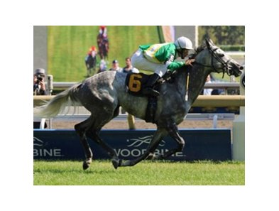 Musketier sweeps to four-length Singspiel win over the Woodbine turf course.