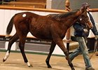 A Dutch Art colt topped the final session of the Tattersalls December Foal Sale at 105,000 guineas.