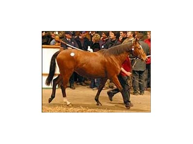 Specifically tops third day of action at Tattersalls auction.