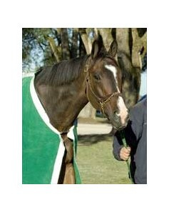 "Lava Man is prepping for BC at Keeneland.<br><a target=""blank"" href=""http://www.bloodhorse.com/horse-racing/photo-store?ref=http%3A%2F%2Fpictopia.com%2Fperl%2Fgal%3Fgallery_id%3DS204654%26process%3Dgallery%26provider_id%3D368%26ptp_photo_id%3D601496%26sequencenum%3D4%26page%3D"">Order This Photo</a>"