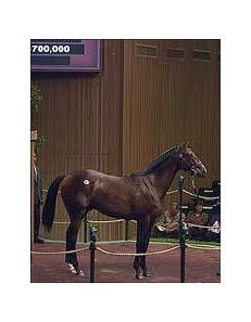 Unbridled's Song colt is early Thursday sale topper.