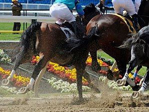Preakness TV Ratings  Down, But OK