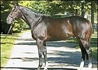 Stallion Medaglia d'Oro, relocating to Stonewall Farm.