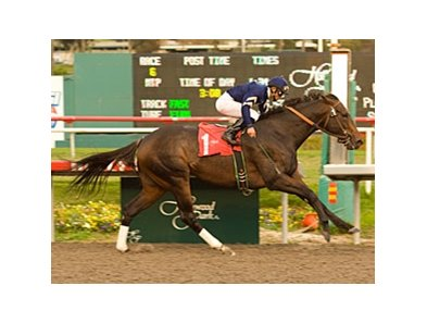 "Slew's Tizzy pulls away in the Native Diver.<br><a target=""blank"" href=""http://www.bloodhorse.com/horse-racing/photo-store?ref=http%3A%2F%2Fpictopia.com%2Fperl%2Fgal%3Fprovider_id%3D368%26ptp_photo_id%3D6978690%26ref%3Dstory"">Order This Photo</a>"