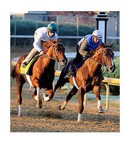 "Drosselmeyer (left) and Birdrun worked at Churchill Downs on Oct 29.<br><a target=""blank"" href=""http://www.bloodhorse.com/horse-racing/photo-store?ref=http%3A%2F%2Fpictopia.com%2Fperl%2Fgal%3Fprovider_id%3D368%26ptp_photo_id%3D9722407%26ref%3Dstory"">Order This Photo</a>"