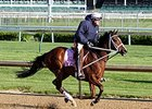 'Man in the White Hat' Guns for Oaks Again