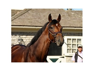 "Big Brown at Three Chimneys<br><a target=""blank"" href=""http://www.bloodhorse.com/horse-racing/photo-store?ref=http%3A%2F%2Fpictopia.com%2Fperl%2Fgal%3Fprovider_id%3D368%26ptp_photo_id%3D6609293%26ref%3Dstory"">Order This Photo</a>"