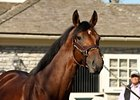 "Big Brown<br><a target=""blank"" href=""http://www.bloodhorse.com/horse-racing/photo-store?ref=http%3A%2F%2Fpictopia.com%2Fperl%2Fgal%3Fprovider_id%3D368%26ptp_photo_id%3D6609293%26ref%3Dstory"">Order This Photo</a>"