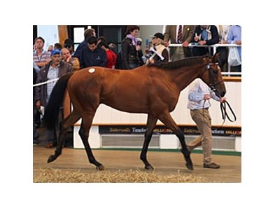 Coolcullen Times, a 3-year-old son of Rock of Gibraltar, brought the top price of of 155,000 guineas at the Tattersalls July mixed auction.