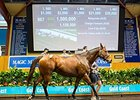 Response topped the second day of the Magic Millions broodmare sale when she sold for $1.5 million (US$1,159,620).