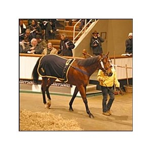 Airwave topped the first session of the Tattersalls December sale.