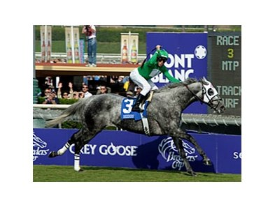 California Flag (pictured) and Dancing in Silks, both Breeders' Cup winners last year, share the honor of California-bred Horse of the Year for 2009.