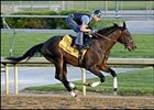 "Street Sense, one of 7 homebreds competing for Derby glory.<br><a target=""blank"" href=""http://www.bloodhorse.com/horse-racing/photo-store?ref=http%3A%2F%2Fpictopia.com%2Fperl%2Fgal%3Fgallery_id%3D14779%26sequencenum%3D0%26provider_id%3D368%26process%3Dgallery%26page%3Dthumbnails"">Derby Works Photos</a>"