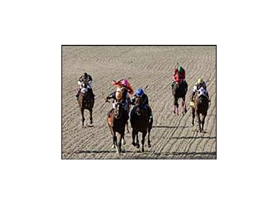 Horses race on the Tapeta surface at Presque Isle Downs.