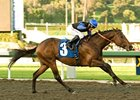 "Bob Black Jack returns with a dominating performance in the San Carlos.<br><a target=""blank"" href=""http://www.bloodhorse.com/horse-racing/photo-store?ref=http%3A%2F%2Fpictopia.com%2Fperl%2Fgal%3Fprovider_id%3D368%26ptp_photo_id%3D8802809%26ref%3Dstory"">Order This Photo</a>"