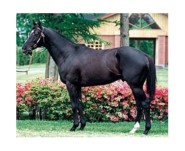 Sunday Silence, sire of Matsurida Gogh.