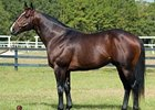 Florida Stallion Gibson County Dead