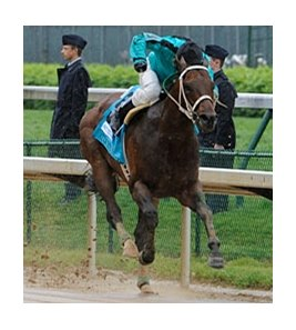 "Atta Boy Roy and Calvin Borel lead all the way in the Churchill Downs Stakes.<br><a target=""blank"" href=""http://www.bloodhorse.com/horse-racing/photo-store?ref=http%3A%2F%2Fpictopia.com%2Fperl%2Fgal%3Fprovider_id%3D368%26ptp_photo_id%3D8937799%26ref%3Dstory"">Order This Photo</a>"