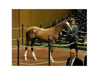 Top-priced weanling on the day was hip#529, an Unbridled's Song - Offshore Breeze filly, who brought $350,000.