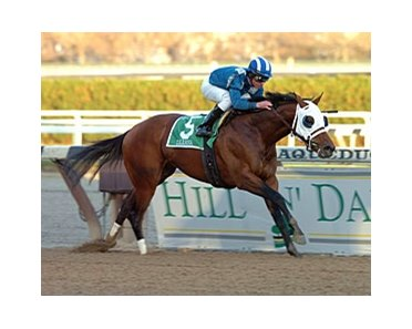 "Daaher is the 120-pound high weight in Donn Handicap (gr. I) at Gulfstream Park Feb. 2.<br><a target=""blank"" href=""http://www.bloodhorse.com/horse-racing/photo-store?ref=http%3A%2F%2Fpictopia.com%2Fperl%2Fgal%3Fprovider_id%3D368%26ptp_photo_id%3D2859628%26ref%3Dstory"">Order This Photo</a>"