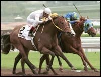 Santa Anita Race Report: Kona Gold Makes It Six In a Row