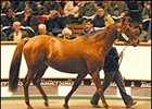 Ramruma, brought a record price at Tattersalls December sale Tuesday.