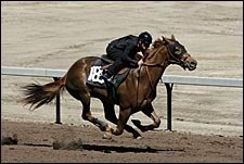 Three Share Fastest Workout Times in Barretts Under Tack Show