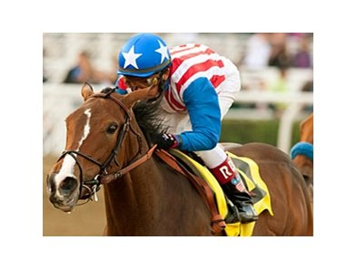 May Day Rose in the 2011 Santa Ysabel.