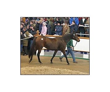 Moments of Joy, brought top price at Tuesday's record session of Tattersalls December sale.