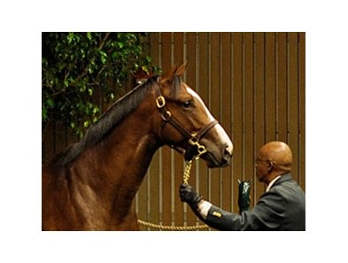 Hip 14 A.P.Indy-Balance sold for $4,200,000 at the Keeneland Yearling Sales in Lexington, KY.
