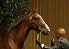 Keeneland September Sale Starts With a Bang