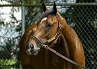 "Barbaro<br><a target=""blank"" href=""http://www.bloodhorse.com/horse-racing/photo-store?ref=http%3A%2F%2Fpictopia.com%2Fperl%2Fgal%3Fprovider_id%3D368%26ptp_photo_id%3D773479%26ref%3Dstory"">Order This Photo</a>"