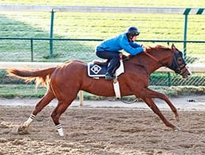 Dullahan, Shackleford Drill for Romans