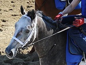 Frosted - Belmont Park, May 22, 2015.