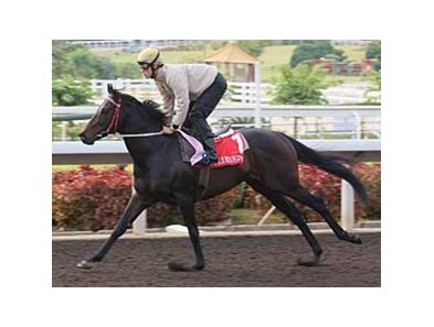 Eagle Mountain will run in the Cathay Pacific Hong Kong Cup (HK-I) on Dec. 14.