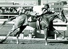 Affirmed at Santa Anita