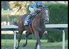 Edgar Prado guides Harlan's Holiday to victory in the Florida Derby.