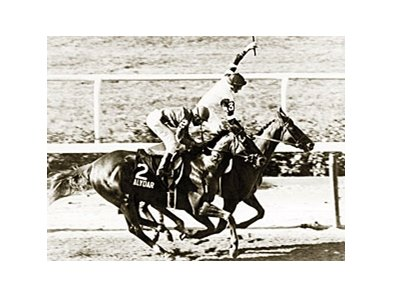 Affirmed and Alydar in the Blemont Stakes.