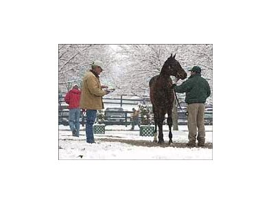 Prospective buyers browse among the offerings at Fasig-Tipton mixed sale.
