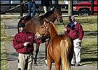 Buyers look at horses offered at the Fasig-Tipton Kentucky Winter Mixed Sale.