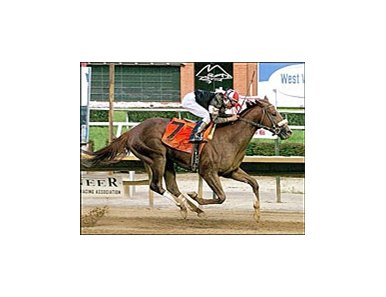 Sir Shackleton wins the West Virginia Derby, Saturday at Mountaineer Race Track.