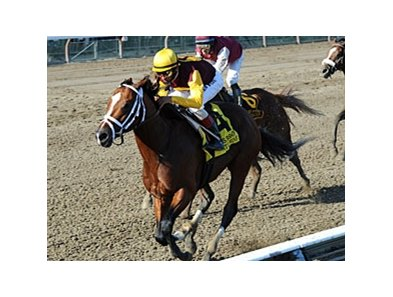 "Discreetly Mine dominates the King's Bishop at Saratoga.<br><a target=""blank"" href=""http://www.bloodhorse.com/horse-racing/photo-store?ref=http%3A%2F%2Fpictopia.com%2Fperl%2Fgal%3Fprovider_id%3D368%26ptp_photo_id%3D9162057%26ref%3Dstory"">Order This Photo</a>"