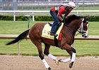 Danzig Moon Confirmed for Preakness