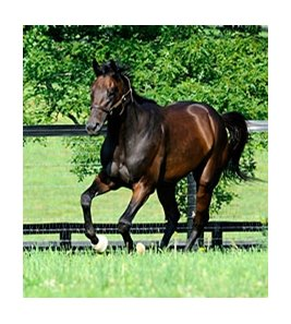 "Uncle Mo at WinStar Farm<br><a target=""blank"" href=""http://www.bloodhorse.com/horse-racing/photo-store?ref=http%3A%2F%2Fpictopia.com%2Fperl%2Fgal%3Fprovider_id%3D368%26ptp_photo_id%3D9556215%26ref%3Dstory"">Order This Photo</a>"